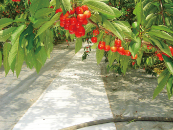 果樹反射用スノーテックス(有孔)1.5×50m (1本)