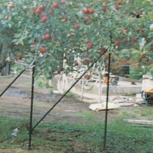 果樹枝受支柱 りんご(ぶどう・梨・柿)33×3.3 黒 (10本)